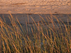 IMG_0848 (ericssonbo24) Tags: seagrass sand water sunset summer season nature bay
