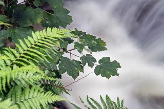 Tilberthwaite Ghyll