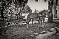 La Pariglia !!!! (*SevePhoto*) Tags: cavallo clickofart cavalli bassanoromano bassano bassanoromanovt viterbo vintage d610 raduno carretto lazio lexar italy italia nikon nikkor nital natura nero sevephoto severino seve storico 2016