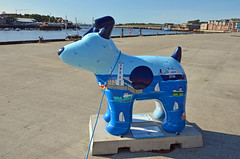 Skipper-L-17-September-2016 (Steve Ellwood Whitley Bay) Tags: greatnorthsnowdogs guidedog mikeclay northshields cliffordsfort ellwood steveellwood skipper joannewishart dfds westernquay fishquay