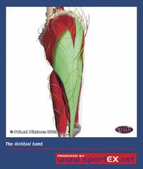 The iliotibial band (sportEX journals) Tags: sportexdynamics