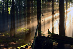 little sunbeam tree (Christopher J. Morley) Tags: trees light mist tree beautiful vancouver forest high log nikon bc little walk north columbia hike illuminated iso british jpeg sunbeam wander d600 testingout