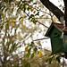 birds hostel