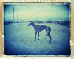 Kino in Palm Springs, CA (moominsean) Tags: california morning greyhound mamiya polaroid kino desert palmsprings windmills 100mm monsoon instant 28 universal turbines type108 thelittledoglaughed expired012000
