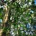 I bei alberi all'interno del parco El Gallineral