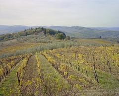 (Evgeny Chulyuskin) Tags: autumn 120 mamiya film mediumformat 7 vine scan negative ii epson 6x7 grape v700 mamiya7ii 7ii grapefield epsonperfectionv700 kodakportranew400