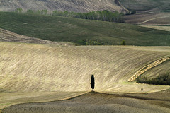 Fields in Tuscany (Christian Wilt) Tags: trees tree field yellow tuscany christianwilt sognidreams
