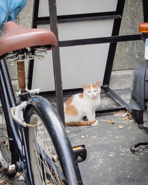 Today's Cat@2012-10-13