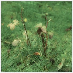 Going Away (spodzone) Tags: plants blur colour art nature grass closeup composite manipulated square lens photography scotland highlands flora dof emotion bokeh decay space places calm equipment negativespace bland change pentacon toned contrasts tranquil stacked brenizer digikam strathnairn rawconversion pentacon50mm sharpsoft enfuse rawtherapee naturehappens darktable