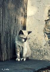 sweet [ Explore 14 oct 2012 ] (L_Luka) Tags: portugal cat sweet alentejo doce bb tenderness gatinho ternura canoneos450d magicmomentsinyourlifelevel2 magicmomentsinyourlifelevel1
