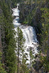 Western U.S. Vacation 2012 (MacabreX) Tags: tree water river waterfall yellowstonenationalpark yellowstone wyoming 2012 keplercascades