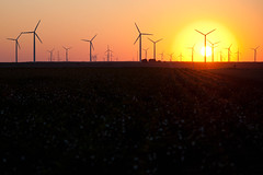 Fields of Money! (TxPilot) Tags: windmill cotton generators westtexas windfarm sweetwater whitegold