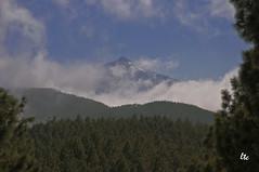 Teide entre nubes (letrucas) Tags: espaa spain cielo nubes tenerife pinos teide canaryislands niebla pinares islascanarias elgaitero flickrsbest flickraward isladetenerife
