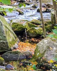 Great Smoky Mountains National Park (mikerhicks) Tags: camping geotagged unitedstates hiking tennessee gatlinburg gsmnp elkmont greatsmokeymountainnationalpark camera:make=canon exif:make=canon exif:isospeed=800 geo:state=tennessee nashvillehikingmeetup exif:focallength=63mm geo:countrys=unitedstat
