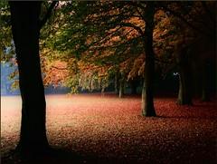 Exploring October (Marie Granelli) Tags: autumn tree skne october sweden explore sdersltt nikons8000