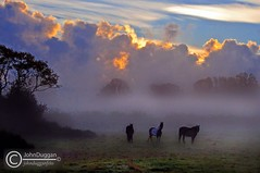 Autumn Morning  87671012. (johndugganfoto) Tags: kilkenny ireland horses fog autumnmorning thegalaxy johndugganfoto ei8frb
