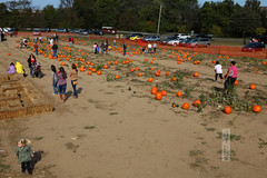 Pumpkin Picking (wmliu) Tags: usa pumpkin us newjersey nj holmdel picking wmliu
