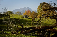 fall for trees and people (AincaArt) Tags: autumn light mountain tree fall berg schweiz switzerland licht ast branch suisse herbst deadtree l svizzera baum afternoonlight berneroberland berneseoberland stockhorn svizra mungga abgestorbenerbaum nachmittagslicht nikond7000 aincaart