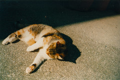 Playing! (Halibel14) Tags: street light shadow summer italy sun playing color mamiya film animal cat island photography capri photo play kodak 200 yashica summ 135ef