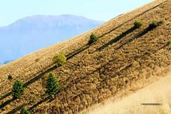 Ombre lunghe sul pendio (ventofreddo - www.fotoandreacorbo.com) Tags: autumn italy mountain nature canon italia shadows natura ombre tamron autunno alpi 18200 montagna lombardia 2012 prealpi tamron18200 ventofreddo canoneos550d andreacorbo eos550d