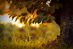 Fall (Andrea LD) Tags: autumn sunset red orange tree green fall leaves foglie canon eos golden bokeh 85mm hour 7d usm f18 85 ef