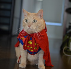 Happy Halloween from the cats by Malingering, on Flickr