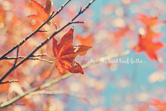 When the last leaf falls ... (Yavanna Warman {off}) Tags: autumn light red naturaleza tree fall hoja nature leaves canon eos 50mm leaf rojo dof seasons bokeh text árbol otoño f18 pdc milde 1000d yavannawarman