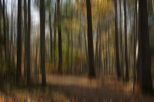 Autumn Blur 4