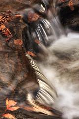 leaving (Carol Clark Harris) Tags: nature water leaves stream stones cascade
