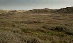 20121031-_DSC1173.jpg (Jan de Graaf) Tags: nature nikon natuur landschap infocus highquality d5000 noordhollandsduinreservaat nikond5000 jandegraaf jdegraaf
