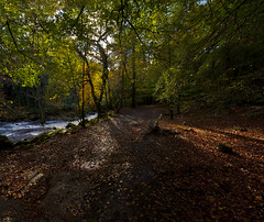 Autumn beside the Erme (yadrad) Tags: autumn southwest leaves river landscape devon southhams ivybridge sigma1530 rivererme canon5dmk2