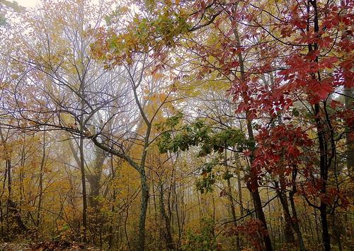 I colori della natura.... (rospex) parco foglie alberi natura colori bosco sibillini amandola
