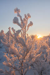 The Long Season (chrisgatto) Tags: sunset sun lake snow plant canada ice frozen frost nt nwt yellowknife