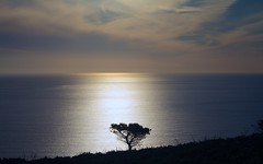 Solitario... / Lonely... (Jos Rambaud) Tags: sunset sea seascape tree arbol atardecer mar tarifa straitofgibraltar valdevaqueros estrechodegibraltar flickraward mygearandme mygearandmepremium mygearandmebronze rememberthatmomentlevel4 rememberthatmomentlevel1 rememberthatmomentlevel2 rememberthatmomentlevel3 me2youphotographylevel2