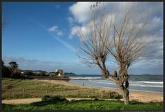 Desnudo en Playa America (NeyZan) Tags: travel winter sea españa tree beach naked arbol mar spain playa atlantic galicia shore invierno pontevedra baiona desnudo atlantico