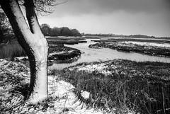 snowy Holes Bay (1 other people) Tags: uk winter england blackandwhite bw snow tree monochrome creek reeds mono pentax dorset pooleharbour hamworthy holesbay k10d grahamhobbs