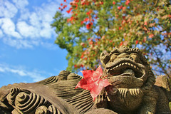 Maple  Lion (Singer ) Tags: blue light shadow red sky sunlight plant tree green clouds composition maple interesting dof bokeh taiwan sunny carving bite taipei                    stonecarvinglion        chineseguardianlion  mygearandme singer singer186