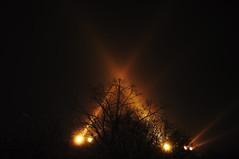 (Hugo Chinaglia) Tags: park city parque trees cidade orange church yellow night garden lights serbia laranja marks amarelo igreja jardim noite belgrade arvores belgrado d90 servia tamajdan 18105mm