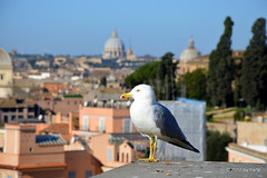 A little break (hartp) Tags: italien italy rome color colour colors d50 catchycolors nikon gull möwe farbe rom farben petersdom helluva welltaken hartp hartp94315 wowiekazowie macromix