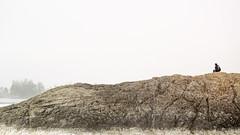 106 (jon.scrimgeour) Tags: mountains bear grizzly lake blue glacier jasper banff lakelouise emerald forrest forest valley snow snowcapped icefields icefieldsparkway dji drone uav phantom3 polarized puffyclouds aerialphotography river ice camping roadtrip vertigo raven crow mountaingoat goat sheep bighorn bighornsheep elk blackbear berries cliff expanse fire campfire van chevy astro vanlife nightsky mountrobson stars creation rack antlers horns portrait