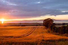 sunset_field_walking_3961-2 (allybeag) Tags: sunset fields solway cumbria crosby