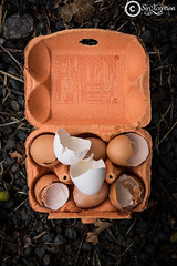 Dodentocht (sirixception) Tags: belgi bornem dodentocht wandeling hard ei egg walk trail dotoforfelix poes eten food sirixception sirixceptionfotografie