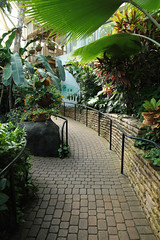 Path (Pythaglio) Tags: franklin park conservatory botanical botany columbus ohio county pacific island water garden path pathway walkway railings metal stone retaining wall plants lush tropical palms colorful pavers