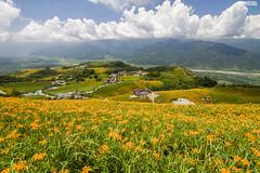 __MG_6909 (aling_li) Tags: taiwan hualien lilyflower
