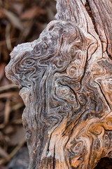 Explosion (Raphs) Tags: italy italia frascati villatuscolana olivetree wood old structure texture closeup abstract treetrunk raphs canoneos70d tamronspaf1750mmf28xrdiiildaspherical weathering