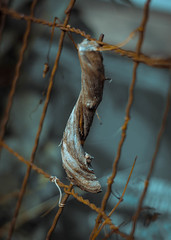 236/366 (yewandeblue) Tags: 365project 366project complimentary curl fence home intertwined rust twine twist wire