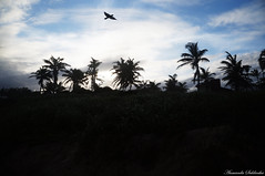 Praia do Flamengo - Stella Maris/Ba - Brasil (AmandaSaldanha) Tags: nature natureza blue azul cu sky landscape paisagem orla colors cores beauty flickr beach praia inverno winter bahia brasil stellamaris praiadoflamengo