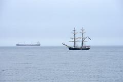 Morgensterner approaching Blyth (DavidWF2009) Tags: morgensterner tallship sailingship blyth northumberland mist sea dutch