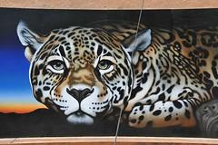 Jaguar Mural Tucson Arizona (Ilhuicamina) Tags: murals arizona tucson animals cats jaguar eljefe art paintings