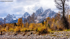 riverbank view of Teton range (Cottage Days) Tags: grandtetonnationalpark nationalpark wyoming landscape autumn trees riverbank mountains